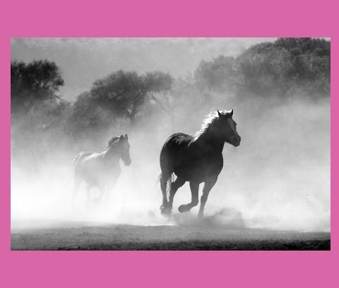 horses Canvas Print 24x20